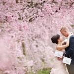 桜|前撮り|ロケーション撮影|ドレス|カラードレス|ウェディングドレス