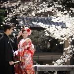 京都日和 桜 ロケフォト 和装001