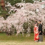 京都日和|桜|ロケ|和装|前撮り|2017_021