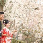 京都日和|桜|ロケ|和装|前撮り|2017_022