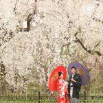 京都日和|桜|ロケ|和装|前撮り|2017_023
