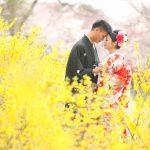 京都日和|桜|ロケ|和装|前撮り|2017_024