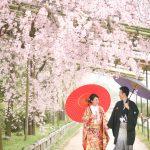 京都日和|桜|ロケ|和装|前撮り|2017_033