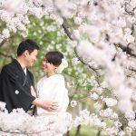 京都日和|桜|ロケ|和装|前撮り|2017_036