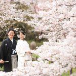 京都日和|桜|ロケ|和装|前撮り|2017_038