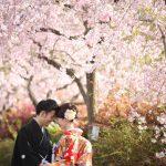 京都日和|桜|ロケ|和装|前撮り|2017_039