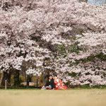 京都日和|桜|ロケ|和装|前撮り|2017_045