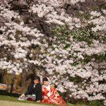 京都日和|桜|ロケ|和装|前撮り|2017_046