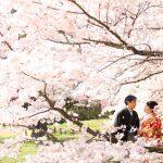 京都日和|桜|ロケ|和装|前撮り|2017_047