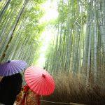 京都日和|前撮り|和装|京都|新緑|嵐山|竹林|2019-01